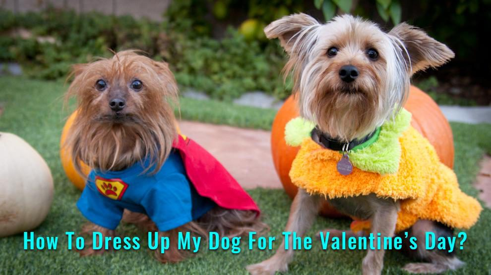 Dog Valentine Costume