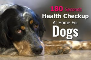 Health Checkup At Home For Dogs