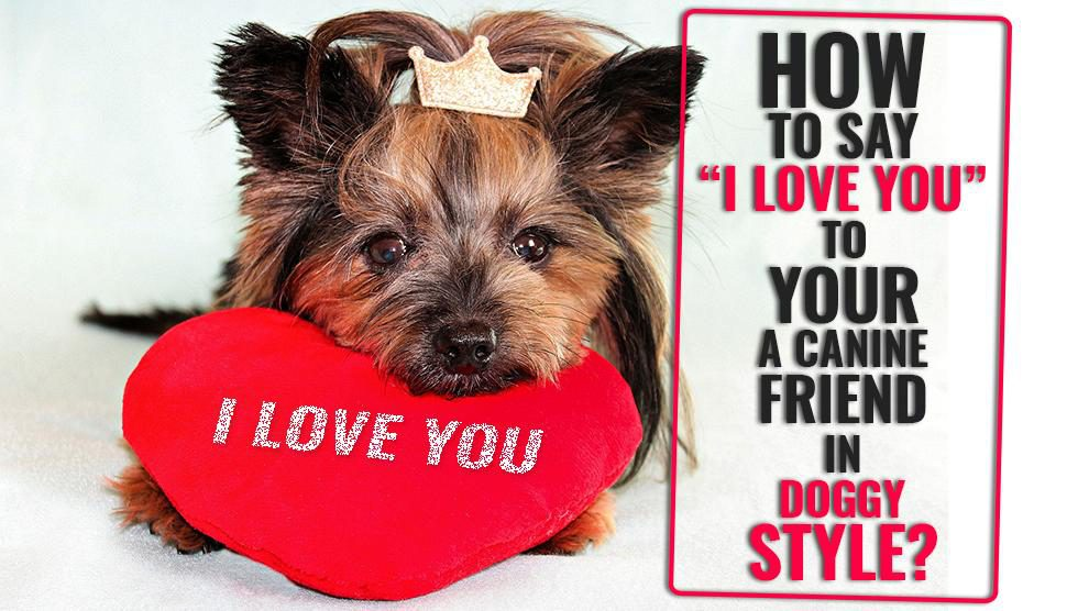 "Say ""I Love You"" To Your Dog"