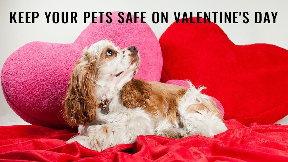 Keep Your Pets Safe On Valentine's Day