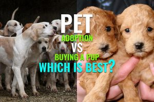 Pet Adoption Vs Buying A Pup