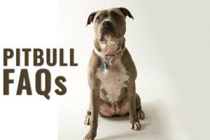 Pitbull FAQs