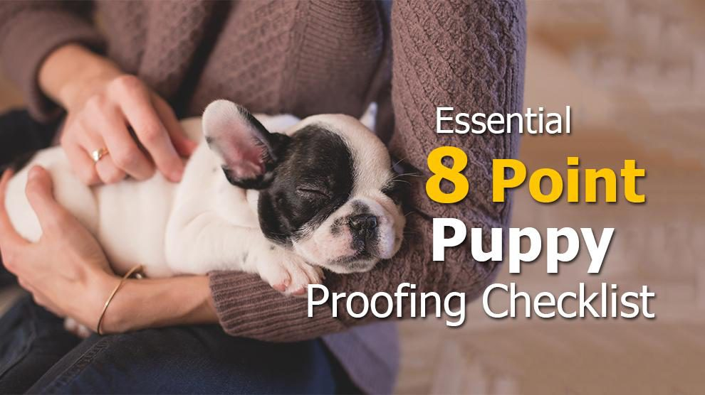 Puppy Proofing Essentials