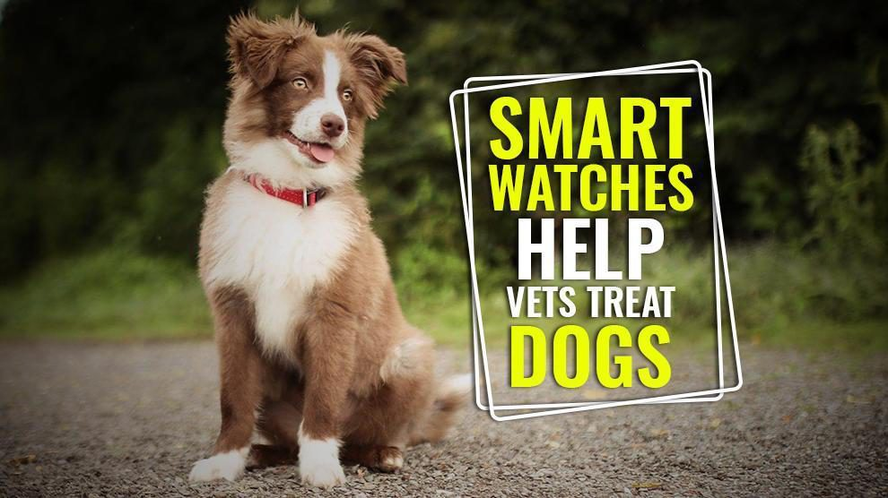 Smart Watches Help Vets Treat Dogs