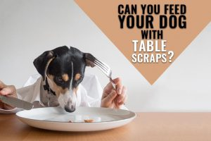 Table Scraps For Dogs