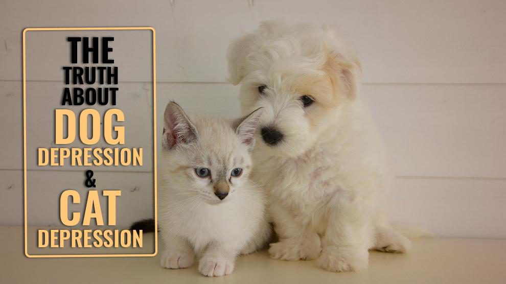 The Truth About Dog Depression And Cat Depression