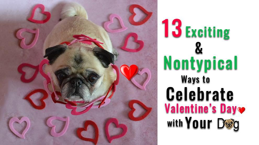 Valentines Day With Your Dog