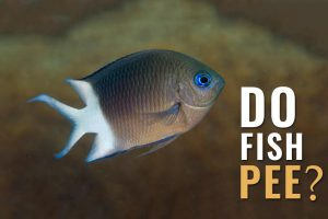 What Do You Think Do Fish Pee And Poop