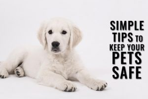 Tips To Keep Your Dogs Safely