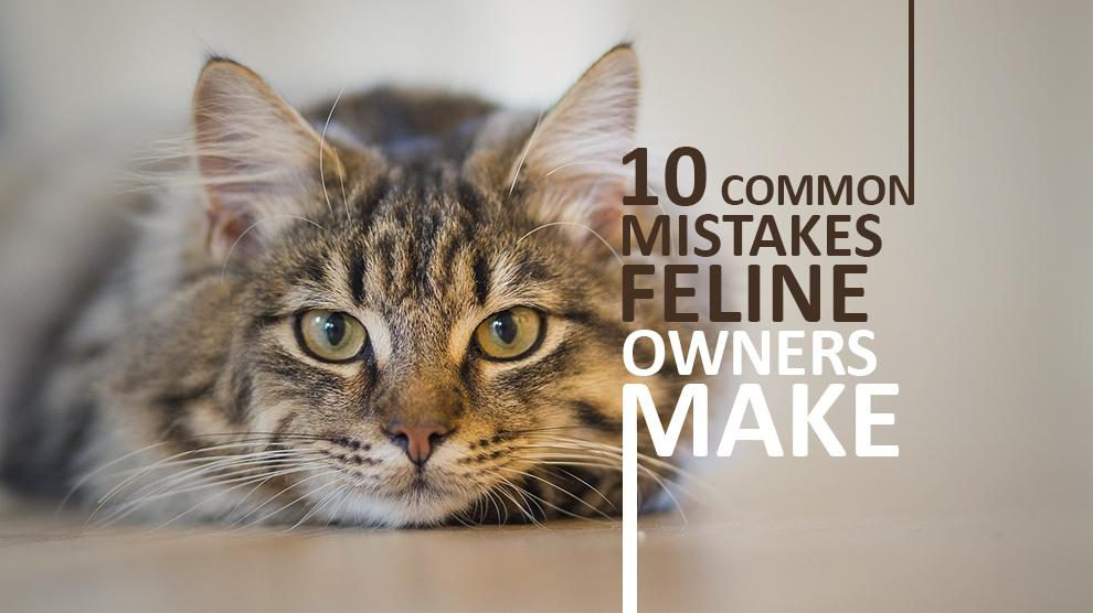 10 Common Mistakes Cat Owners Make