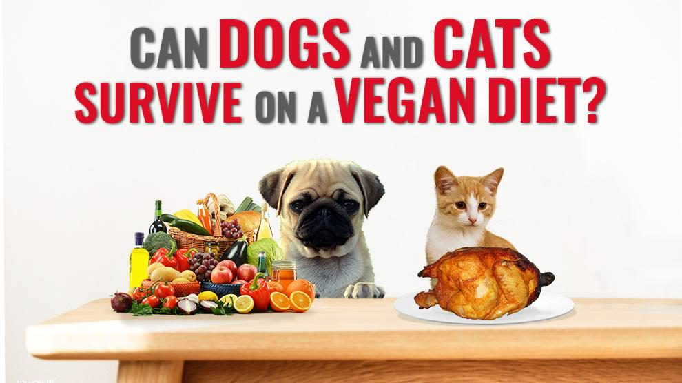 Can Dogs And Cats Survive On A Vegan Diet?
