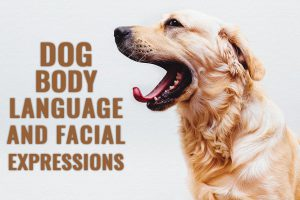 Dog Body Language And Facial Expressions