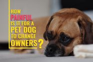 How Painful Is It For A Pet Dog To Change Owners?