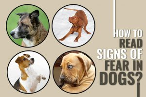 How To Easily Identify Signs Of Fear In Dogs?