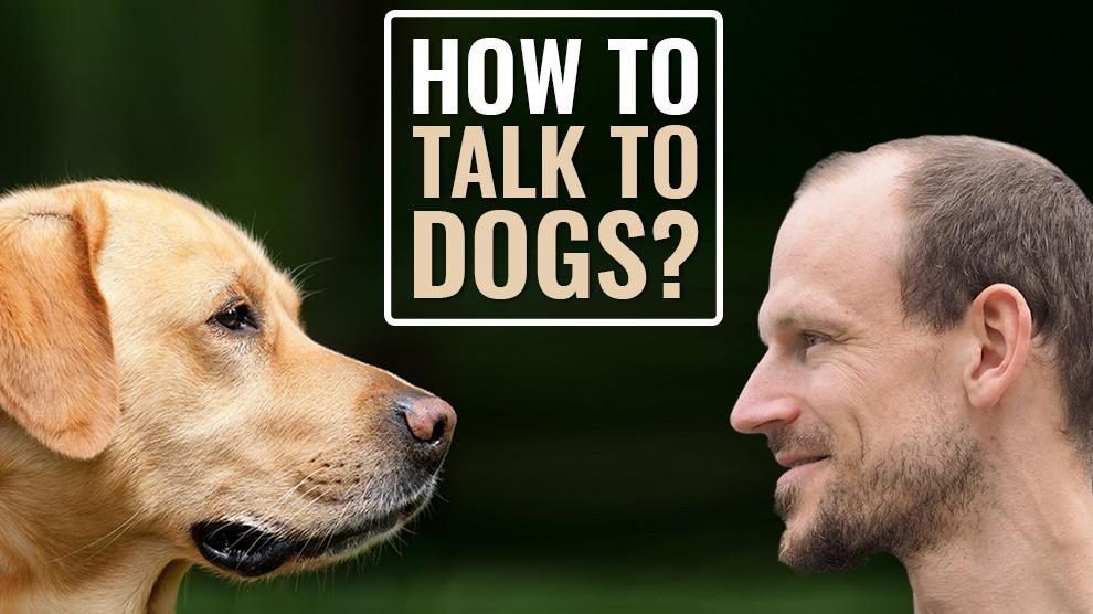 How To Talk To Dogs Without Smothering Them?
