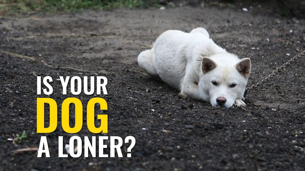 Is Your Dog A Loner?