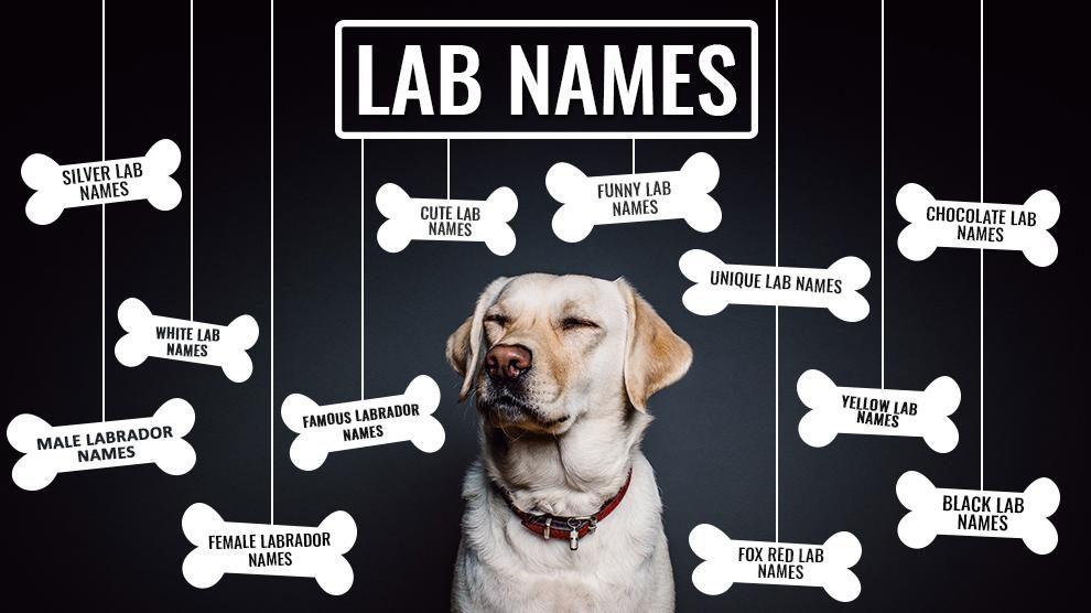 Lab Names