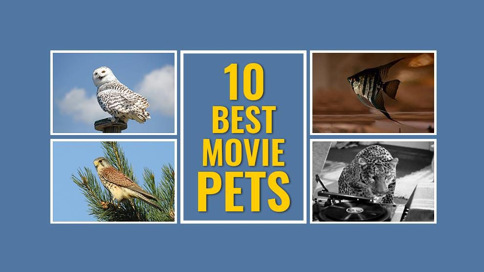 Movie Pets