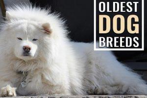 Oldest Dog Breeds