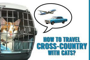 How To Travel Cross Country With Cats?