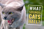 What Sounds Do Cats Hate?