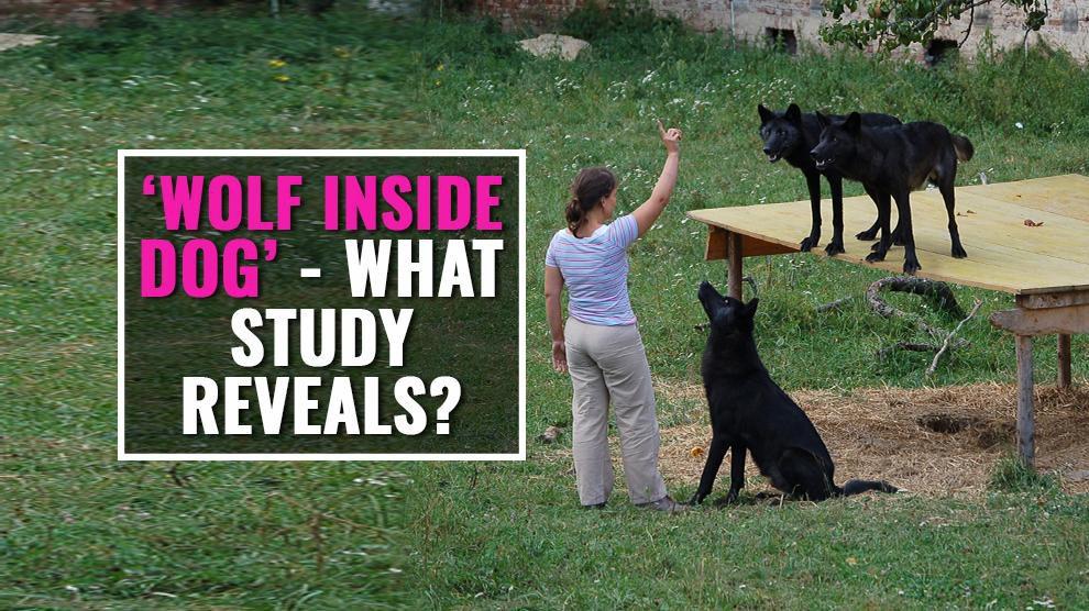 Wolf Inside Dogs