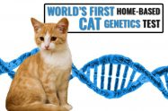 Cat DNA Test Can Explain Your Feline's Breed Ancestry