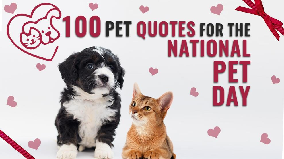 100 Pet Quotes For The National Pet Day