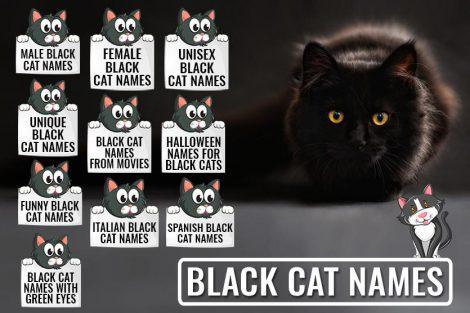 225 Black Cat Names