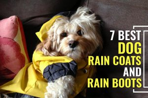 A Sneak Peek Into Most Popular Rain Boots and Raincoats For Dogs