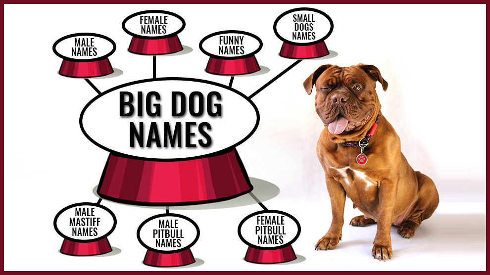 Dog Names Backed With Full Meanings