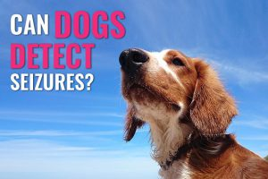 Can Dogs Detect Seizures