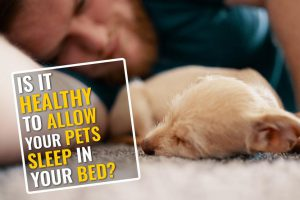 Can You Allow Your Pets To Sleep With You In Your Bed