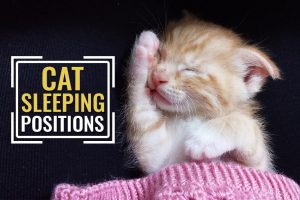 Cat Sleeping Positions