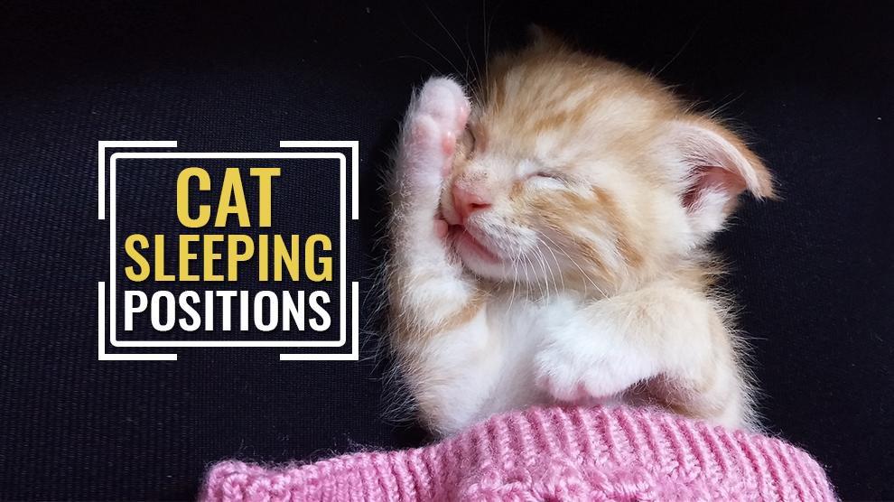 Cat Sleeping Positions