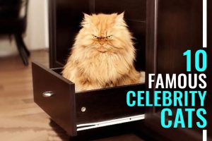 Celebrity Cats
