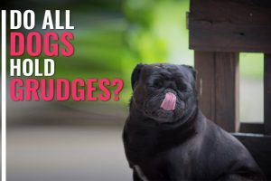 Do Dogs Hold Grudges?