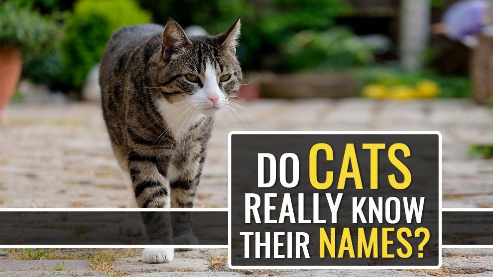 Do Cats Really Know Their Names But Seldom Respond?