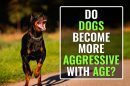 Dog's Behavior Changes With Age