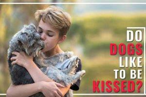 Do Dogs Like To Be Kissed?