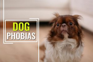 Phobias In Dogs