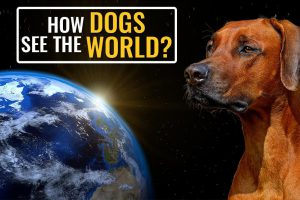 How Dogs See The World?
