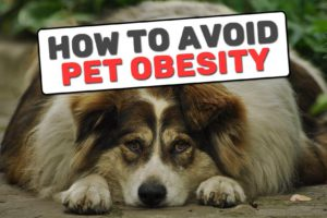 How To Avoid Pet Obesity?