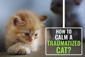 How to Pacify a Cat After a Traumatic Loss?