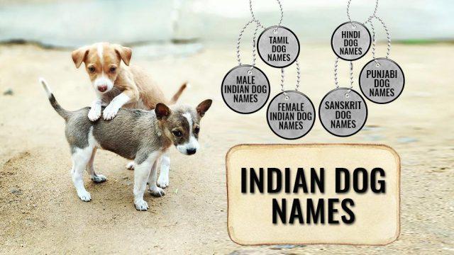 Indian Dog Names