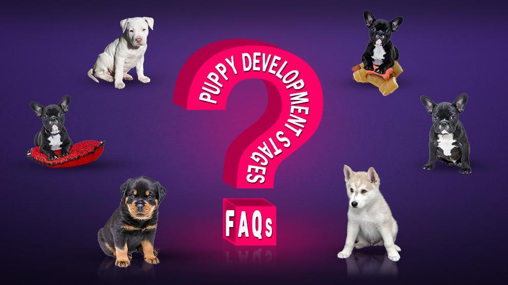 Puppy Development Stages FAQ