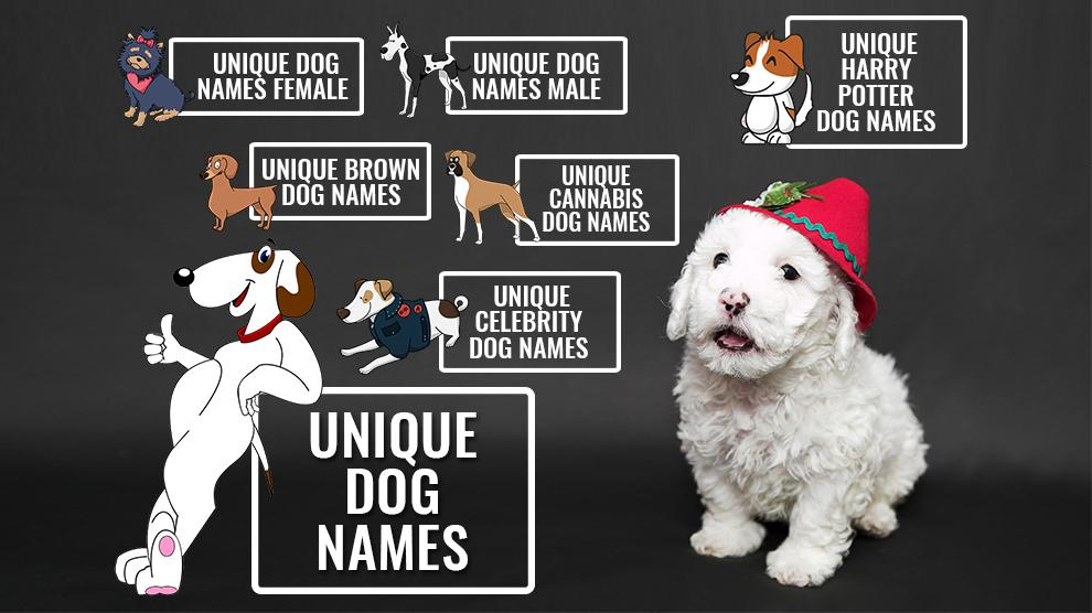 256 Unique Dog Names Unusual Male And Female Dog Names Petmoo