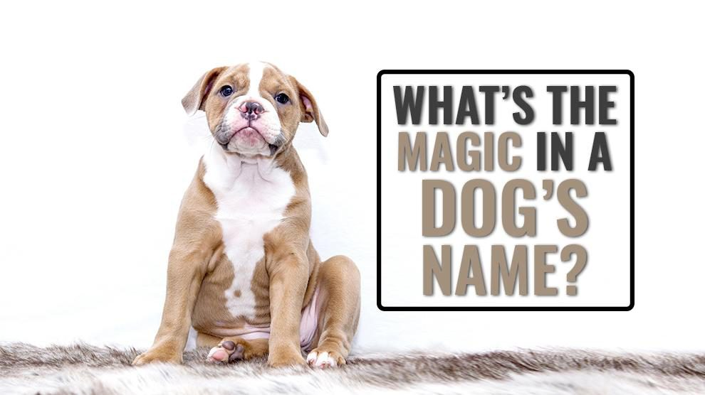 What's The Magic In A Dog's Name?