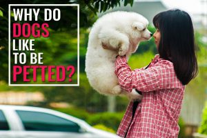 Why Do Dogs Like To Be Petted?