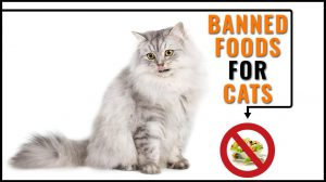 Toxic Foods For Cats